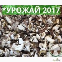 Белый гриб оптом сушеный