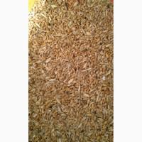 Пшеница 5 класса оптом ГОСТ доставка