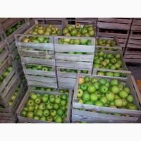 Реализую продажу яблок Беш Юлдуз (опт)