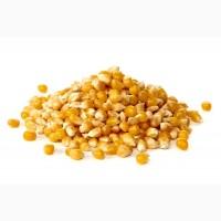 Гибриды семян кукурузы