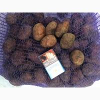 Семенной картофель Ред Скарлетт
