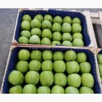 Продаем яблоки из Сербии