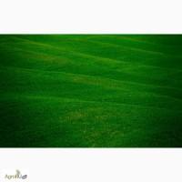 Зелень оптом до 1000 тонн