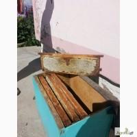 Продам Алтайский Мёд разнотравье. С личной пасеки на Алтае с. Троицкое