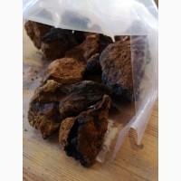 Чага березовый гриб (тело) (оптом от 5кг)