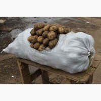 Картофель урожай 2018 оптом от производителя