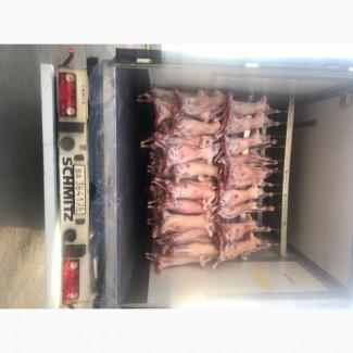 Продаю Мясо баранина больших объёмах