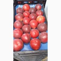 Лысый персик нектарин Октябрьский оптом по доступным ценам от производителя