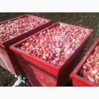 Услуга по посадке чеснока, однозубки и лука севка