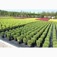 Торговля оптовая цветами и растениями