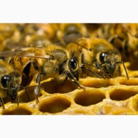 Продаю свежий липовый мед по договорной цене