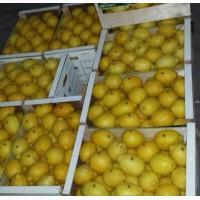 Лимон оптом с доставкой по России
