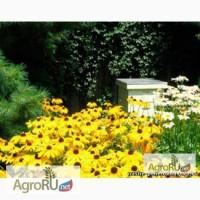 Пчелопакеты кавказской пчелы.Пчеломатки. Весна 2017г
