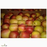 Яблоки, 8 сортов, оптом от 10 кг
