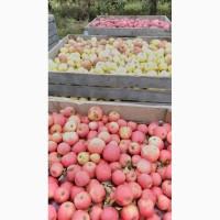 Яблоко на пюре