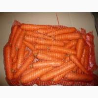 Морковь Желтая оптом от производителя