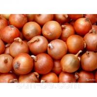 Семена лука Манас первой репродукции (Киргизия)