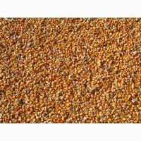 Продаю фуражную кукурузу от производителя. 13300 руб/тонна