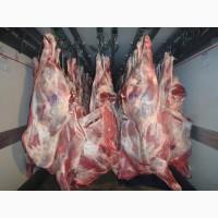 Мясо говядина телятина Оптом от производителя