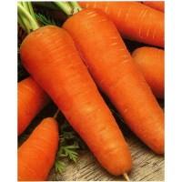 Морковь красная