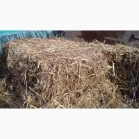 СОЛОМА В РУЛОНАХ от 10шт с доставкой подстилка для животных, мульча, корм