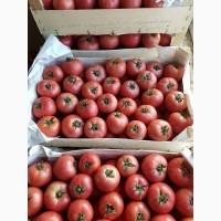Оптовые продажи помидора Ламия