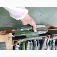 Продаем огурцы из Испании