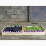 Компания Крымагротара, ящики для упаковки винограда, урожай 2019 г