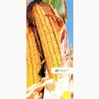 Семена гибридов кукурузы Микси