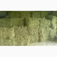 Продажа: силос, сенаж, сено, солома