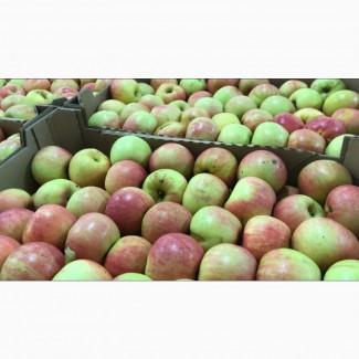 Яблоки оптом в ассортименте