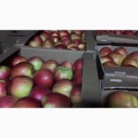 Яблоки оптом. Склад в Иркутске