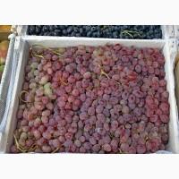 Первоклассный виноград Тайфи готов отправиться в любой уголок России