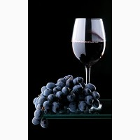 Винный виноград сорта Мерло