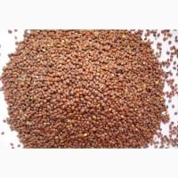 Семена редьки масличной Тамбовчанка ЭС, РС1, РСт