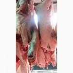 Мясо свиноматок