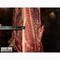 Продаем мясо свинины и говядины как охлажденое так и замороженое, субродукты