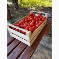 Компания Крымагротара, ящики для упаковки помидоров, урожай 2019 г