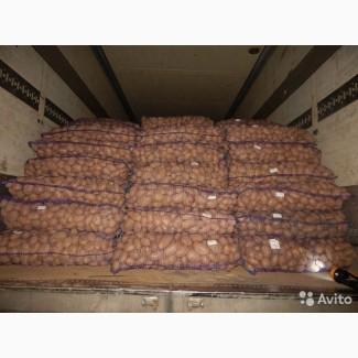 Продаем картофель оптом отпроизводителя
