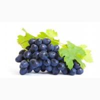 Купим виноград
