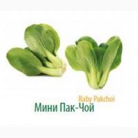 Мини :овощи и зелень напрямую с плантаций и теплиц Турции
