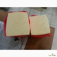 Продам сыр Лори, Сулугуни, Чечил