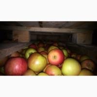 Реализация яблок