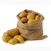 Картофель оптом из Беларуси от ферм. хозяйства