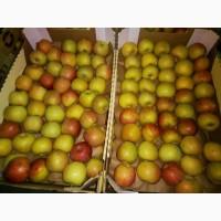 Яблоки Фуджи, сорт 2, калибр 70-75+ от 10 тонн в картонном лотке 60х40, вес 13-15кг мытые