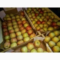 Яблоки Фуджи, сорт 2, калибр 65-70 от 10 тонн в картонном лотке 60х40, вес 13-15кг мытые