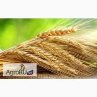 Предоставим транспорт для уборки урожая