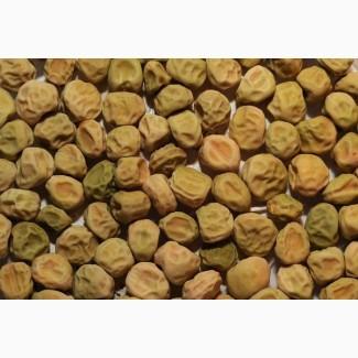 ООО НПП «Зарайские семена» закупает семена: горох посевной от 20 тонн