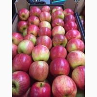 Поставка яблок из Республики Молдова в г. Москва и регионы
