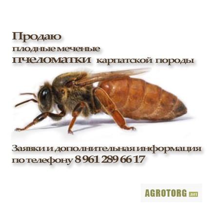 знакомства по телефону ростовская область